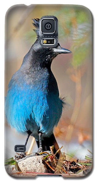 Rocky Mountain Steller's Jay Galaxy S5 Case