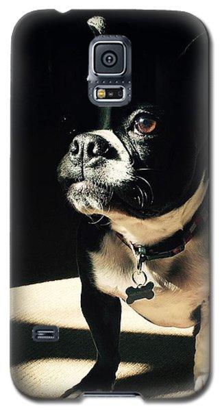 Rocky Galaxy S5 Case by Sharon Jones
