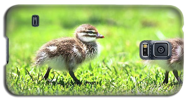 Rogue Duckling, Yanchep National Park Galaxy S5 Case by Dave Catley