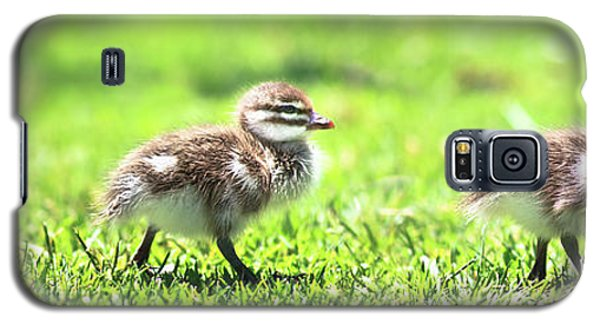 Galaxy S5 Case featuring the photograph Rogue Duckling, Yanchep National Park by Dave Catley