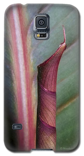 Roll Our The Red Carpet Galaxy S5 Case