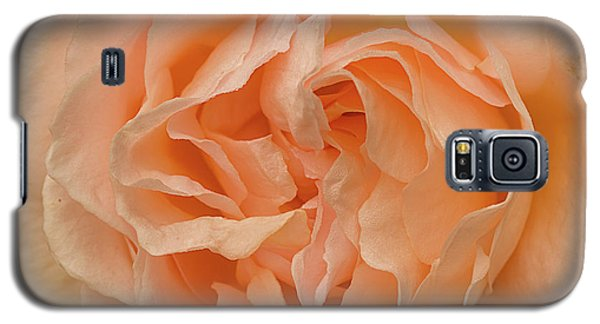 Galaxy S5 Case featuring the photograph Romantic Rose by Jacqi Elmslie