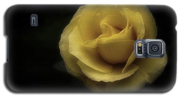 Romantic Yellow Rose 2016 Galaxy S5 Case by Richard Cummings
