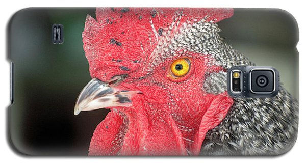 Rooster Named Brute Galaxy S5 Case