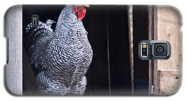 Rooster With Attitude Galaxy S5 Case