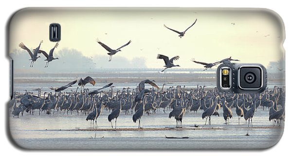 Roosting On The Platte Galaxy S5 Case
