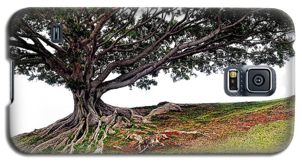 Roots Of Honolulu Galaxy S5 Case by Gina Savage