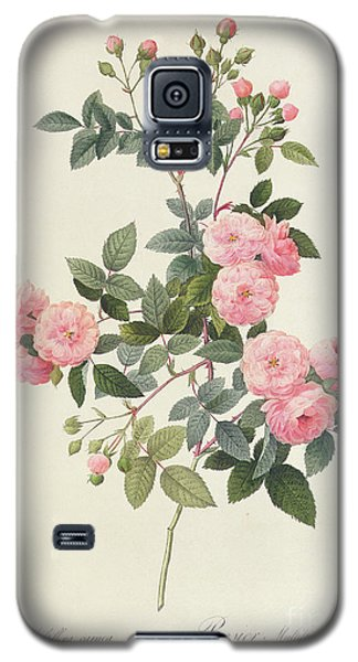 Rosa Multiflora Carnea Galaxy S5 Case