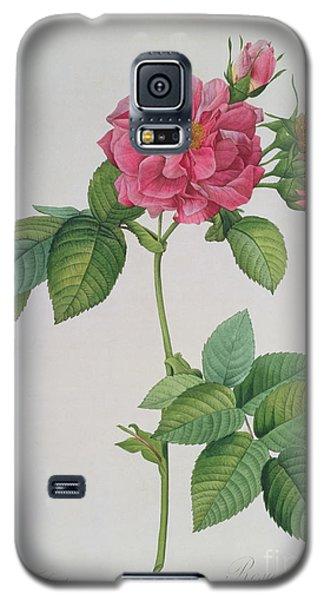 Rose Galaxy S5 Case - Rosa Turbinata by Pierre Joseph Redoute