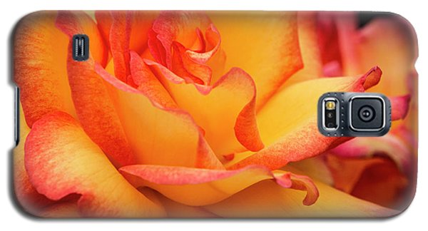 Galaxy S5 Case featuring the photograph Rose Beauty by Jean Noren