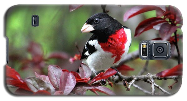 Rose-breasted Grosbeak Galaxy S5 Case