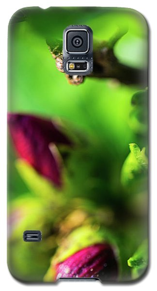 Rose Buds Body Guard Galaxy S5 Case
