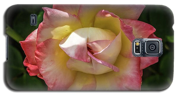 Rose From Mable Ringling's Garden Galaxy S5 Case