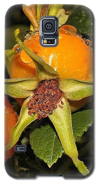 Galaxy S5 Case featuring the photograph Rose Hips by Debbie Stahre