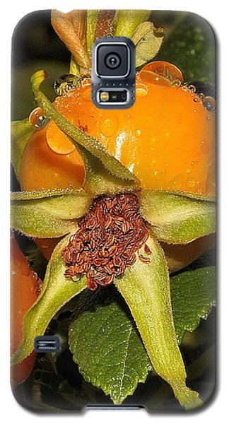Rose Hips Galaxy S5 Case