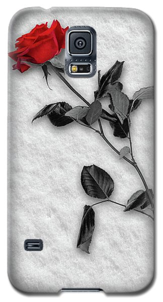 Rose In Snow Galaxy S5 Case