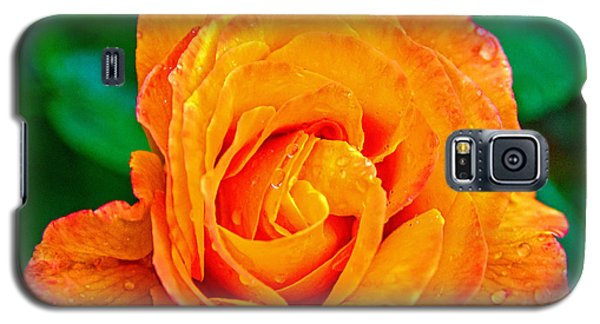 Galaxy S5 Case featuring the photograph Rose by Jerry Cahill