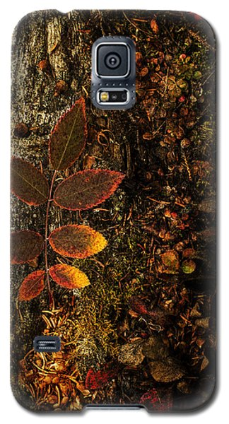 Rose Leaf And The Forest Floor Galaxy S5 Case