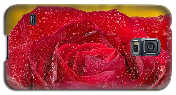Rose N Gold Galaxy S5 Case