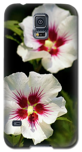 Galaxy S5 Case featuring the photograph Rose Of Sharon by Christina Rollo