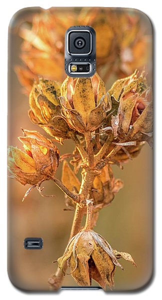 Rose Of Sharon In Winter Galaxy S5 Case