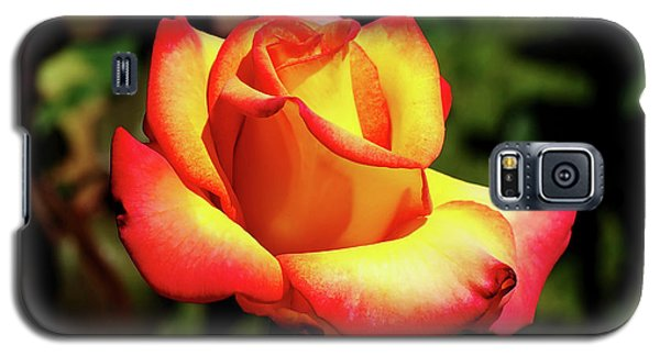 Galaxy S5 Case featuring the photograph Rose To Remember by Dale Stillman