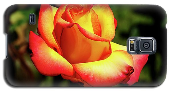 Rose To Remember Galaxy S5 Case