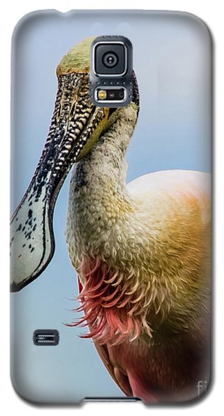 Roseate Spoonbill Close-up Galaxy S5 Case by Robert Frederick