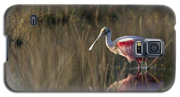 Roseate Spoonbill In Morning Light Galaxy S5 Case