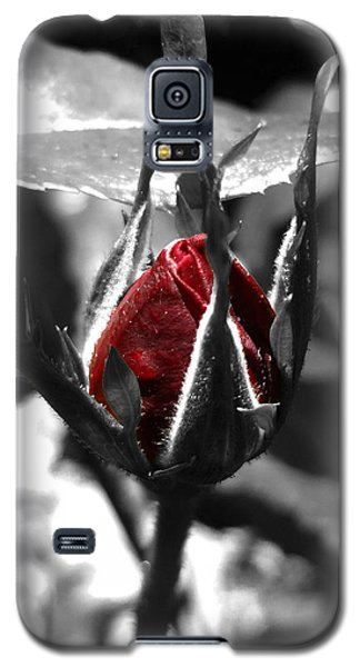Rosebud Red Galaxy S5 Case