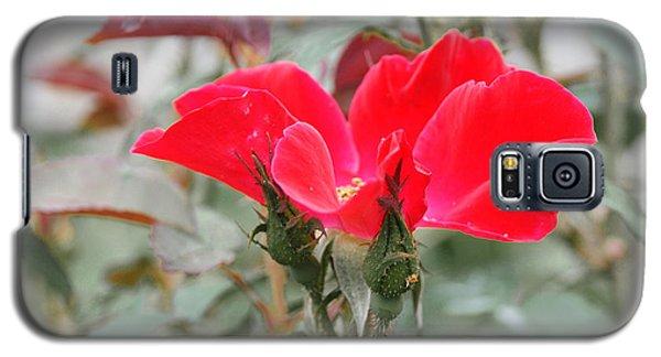 Rosebuds N Red Rose Galaxy S5 Case by Margie Avellino