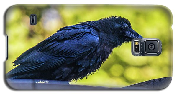 Galaxy S5 Case featuring the photograph Rough Crow  by Jonny D