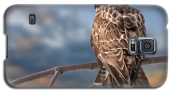 Rough Legged Hawk Galaxy S5 Case