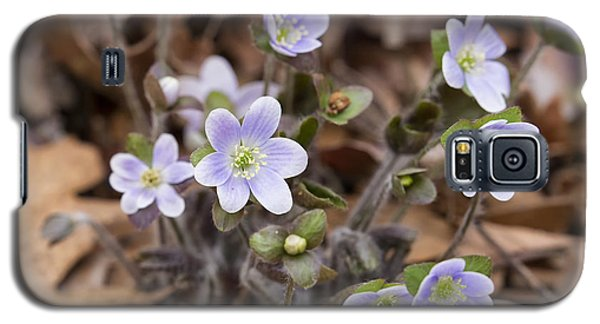 Round Lobed Hepatica Panorama Galaxy S5 Case