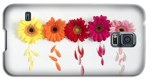 Row Of Gerbera Daisies On White Background Galaxy S5 Case