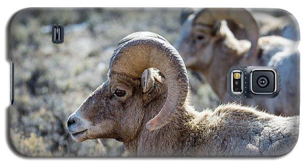 Row Of Sheep Galaxy S5 Case