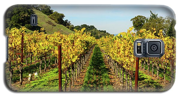 Rows Of Grapevines In Napa Valley California Galaxy S5 Case