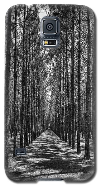 Rows Of Pines Vertical Galaxy S5 Case