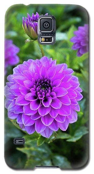 Royal Dahlia Delight Galaxy S5 Case