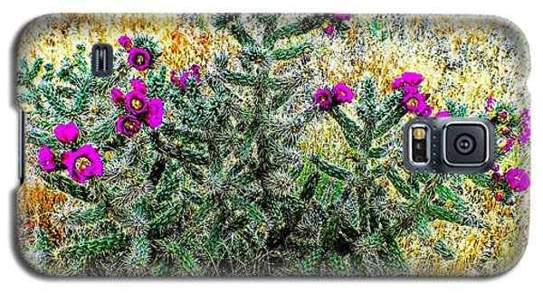 Royal Gorge Cactus With Flowers Galaxy S5 Case by Joseph Hendrix