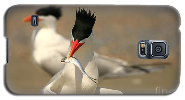Royal Tern Catch Galaxy S5 Case