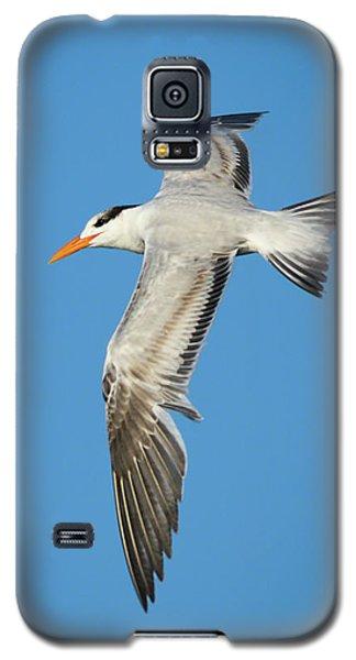 Royal Tern In Flight Galaxy S5 Case