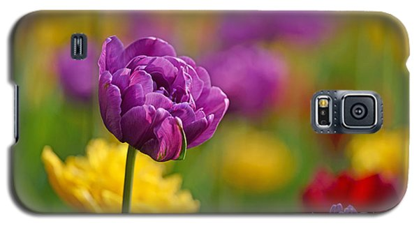 Royal Tulips Galaxy S5 Case