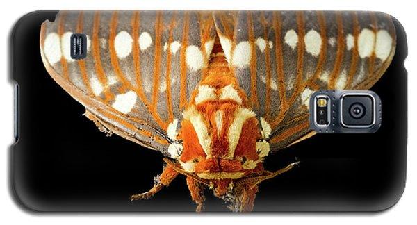 Royal Walnut Moth On Black Galaxy S5 Case