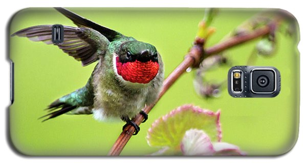 Galaxy S5 Case featuring the photograph Ruby Garden Hummingbird by Christina Rollo