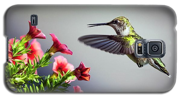 Ruby Throated Hummingbird #1 Galaxy S5 Case