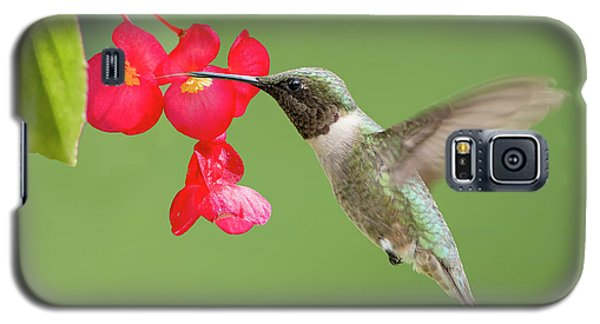 Galaxy S5 Case featuring the photograph Ruby Throated Hummingbird Feeding On Begonia by Bonnie Barry