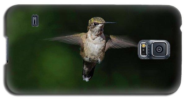Ruby Throated Hummingbird Galaxy S5 Case