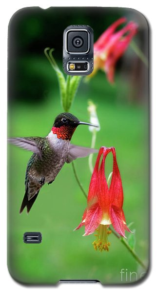 Ruby-throated Hummingbird  Looking For Food Galaxy S5 Case