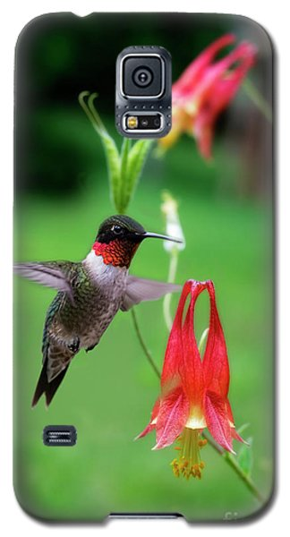 Ruby-throated Hummingbird  Looking For Food Galaxy S5 Case